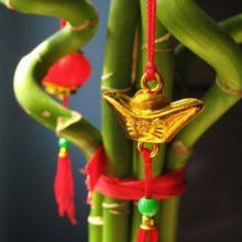 Бамбук счастья, привлекающий удачу